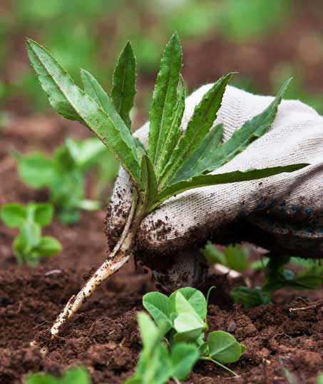 Green Dot Landscapes LLC Weed Control services